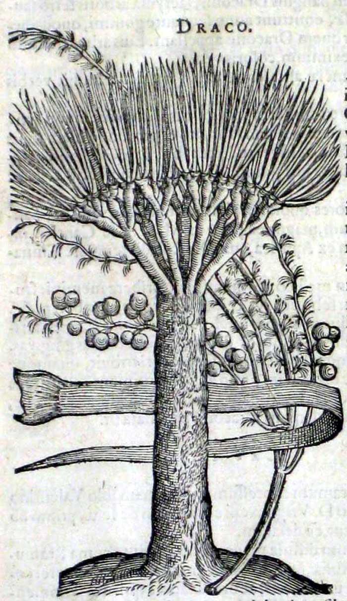 Carolus Clusius2