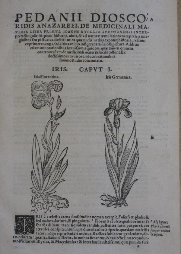 Dioscorides1