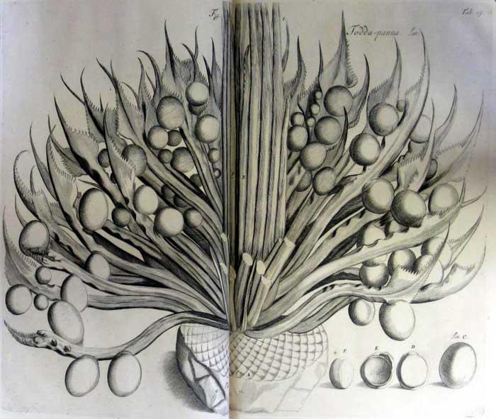 Hortus Indicus2
