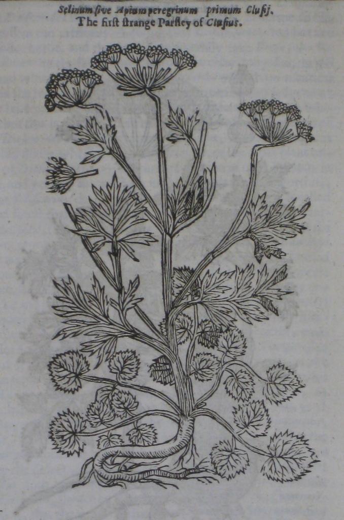 Seventeenth Century2