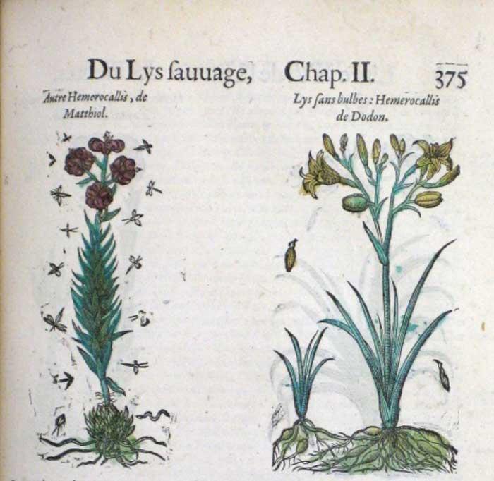 Sixteenth Century3
