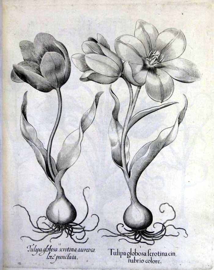 floras1